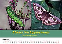 Zwei Leben, Raupe und Schmetterling (Wandkalender 2019 DIN A2 quer) - Produktdetailbild 3
