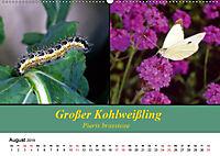 Zwei Leben, Raupe und Schmetterling (Wandkalender 2019 DIN A2 quer) - Produktdetailbild 8