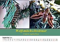 Zwei Leben, Raupe und Schmetterling (Wandkalender 2019 DIN A2 quer) - Produktdetailbild 9