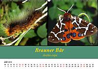 Zwei Leben, Raupe und Schmetterling (Wandkalender 2019 DIN A2 quer) - Produktdetailbild 7