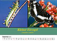 Zwei Leben, Raupe und Schmetterling (Wandkalender 2019 DIN A2 quer) - Produktdetailbild 12