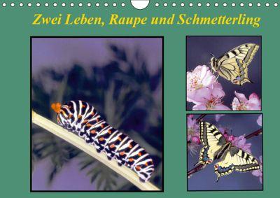 Zwei Leben, Raupe und Schmetterling (Wandkalender 2019 DIN A4 quer), Lothar Reupert
