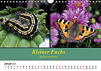 Zwei Leben, Raupe und Schmetterling (Wandkalender 2019 DIN A4 quer) - Produktdetailbild 1