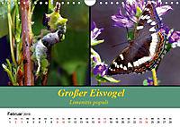 Zwei Leben, Raupe und Schmetterling (Wandkalender 2019 DIN A4 quer) - Produktdetailbild 2