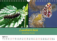Zwei Leben, Raupe und Schmetterling (Wandkalender 2019 DIN A4 quer) - Produktdetailbild 4