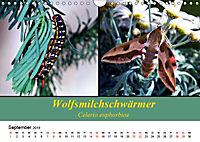 Zwei Leben, Raupe und Schmetterling (Wandkalender 2019 DIN A4 quer) - Produktdetailbild 9