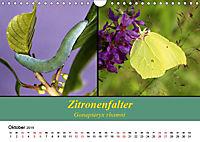 Zwei Leben, Raupe und Schmetterling (Wandkalender 2019 DIN A4 quer) - Produktdetailbild 10