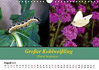 Zwei Leben, Raupe und Schmetterling (Wandkalender 2019 DIN A4 quer) - Produktdetailbild 8