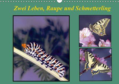 Zwei Leben, Raupe und Schmetterling (Wandkalender 2019 DIN A3 quer), Lothar Reupert