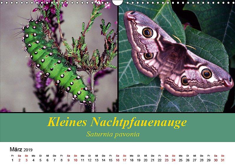 Zwei Leben Raupe Und Schmetterling Wandkalender 2019 Din A3