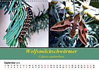 Zwei Leben, Raupe und Schmetterling (Wandkalender 2019 DIN A3 quer) - Produktdetailbild 9
