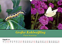 Zwei Leben, Raupe und Schmetterling (Wandkalender 2019 DIN A3 quer) - Produktdetailbild 8