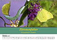 Zwei Leben, Raupe und Schmetterling (Wandkalender 2019 DIN A3 quer) - Produktdetailbild 10