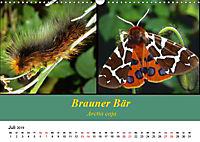 Zwei Leben, Raupe und Schmetterling (Wandkalender 2019 DIN A3 quer) - Produktdetailbild 7