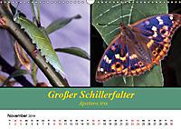 Zwei Leben, Raupe und Schmetterling (Wandkalender 2019 DIN A3 quer) - Produktdetailbild 11